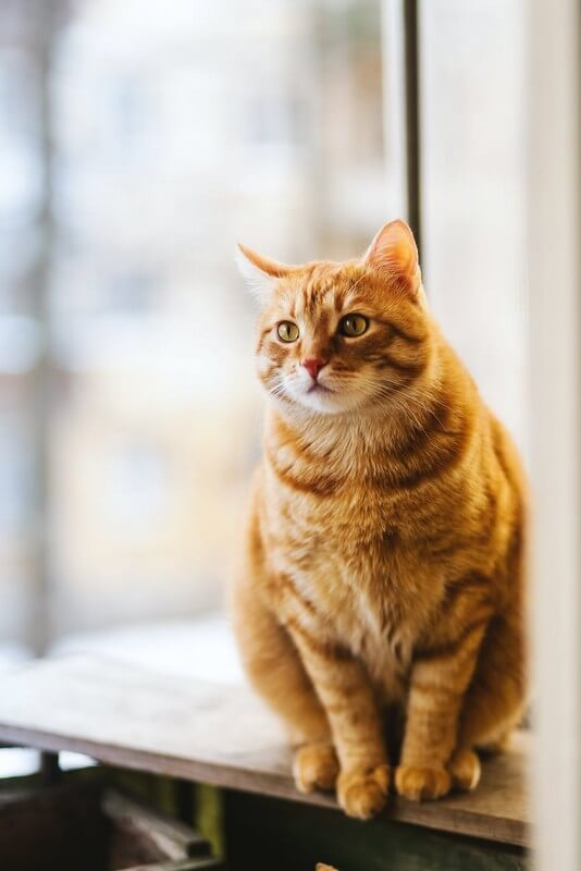 soigner chat stress