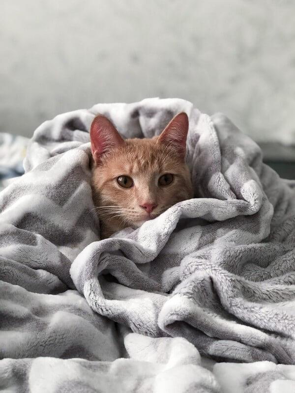 chat adopté